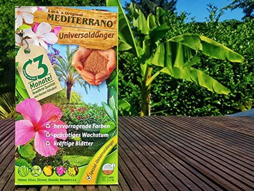 Bananen-Bananenbaum-dünger-bananendünger-Musa Basjoo 1,5 kg Lück´s Original Medirerrano Universal Dünger Einer für Alle!