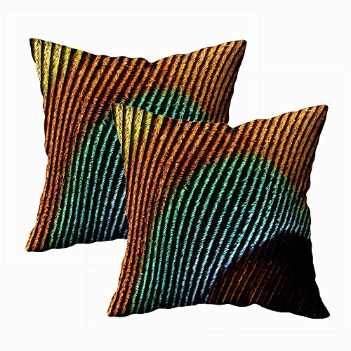 Juego de 2 fundas de almohada para exteriores, 45,7 x 45,7 cm, diseño de pavos reales de plumas, fundas de almohada con cremallera para sofá