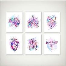 Anatomy Print Anatomical Organs Poster Brain Heart Lungs Liver Pelvis Rib Cage Human Anatomy Art Painting Clinic Wall Art Decor 30x40cmx6 no frame