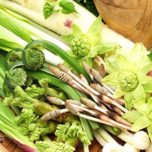 東北産 山菜セットA 500g 山菜4種以上詰め合わせ 山の幸 お取り寄せ
