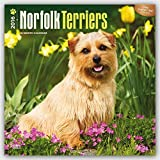 norfolk terrier calendar