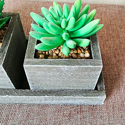 Aisamco Plantas