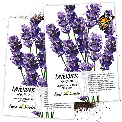 Seed Needs, Munstead Lavender (Lavandula angustifolia) Twin Pack of 500 Seeds Each Non-GMO