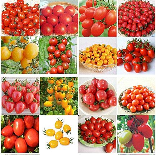 100 graines 24 GENRES TOMOTO mélange de graines emballé Violet Noir Rouge Jaune Vert Cerise Pêche Poire Tomate graines aliments biologiques pour le jardin