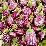 茄子の種ナスの種楕円形の白と紫の縞模様のナス野菜200pcs