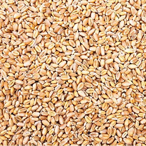 Petigi 15 kg Weizen Gereinigt Hühnerfutter Geflügelfutter Futterweizen Vogelfutter Ernte 2020