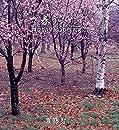 春うらら - Happy Spring -