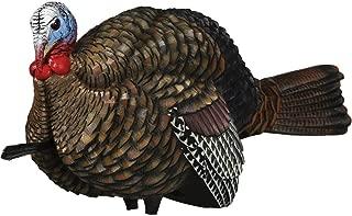 Best avian x turkey strutter Reviews