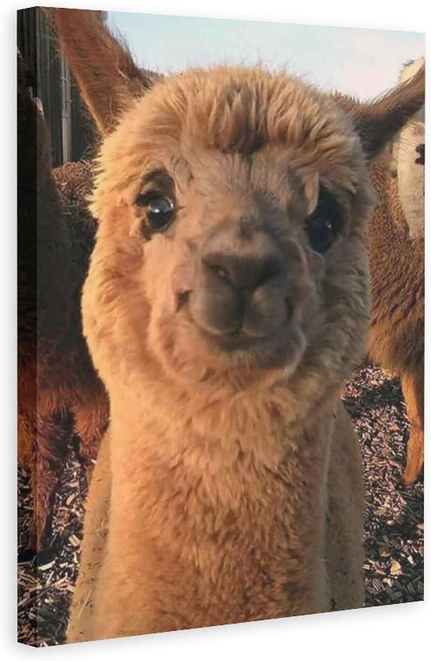 Finally popular brand BDZXHN Lovely Chicago Mall Alpaca Animals Poster Canvas Bedroom Dec 12
