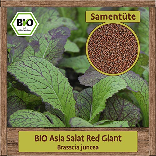 BIO Asia Salat Samen Red Giant Pflücksalat Asiasalat (Brasscia juncea) Gemüsesamen ganzjährig & winterhart