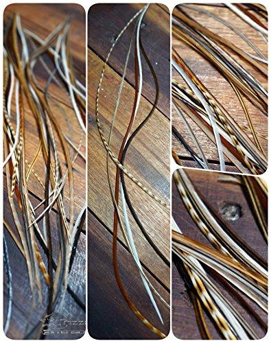 easyin (Variété : Nature 1) très long plus de 30 cm