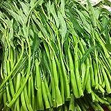 TOYHEART 300Pcs Semi Di Ortaggi Premium, Semi Di Spinaci D'acqua Semi Di Giardino Commestibili Nutrienti Resistenti Al Calore Rustici Per La Casa verde