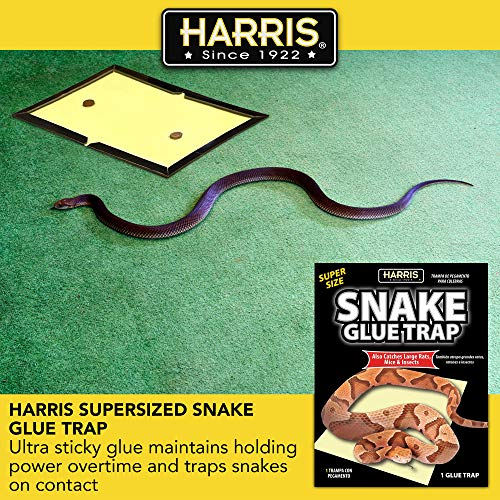 HARRIS Supersized Snake Glue Trap - Extra Strength, Non-Toxic and Multipurpose (1-Pack)