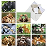 The Best Card Company - 10 Blank Note Cards for All Occasions (4 x 5.12 Inch) - Boxed Animal Cards for Kids - Animal Smackers M6594OCB