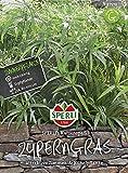 Sperli-Samen Zyperngras Sperli's Katzenspaß / Papyrus