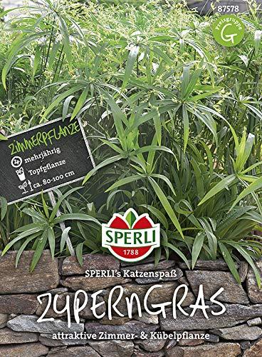 Sperli-Samen Zyperngras Sperli\'s Katzenspaß / Papyrus