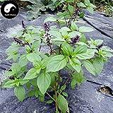 Samen-Paket Nicht Pflanzen: Stück: Kaufen Clove BasilSeeds Seed Ocimum gratissimum Für Luo Le