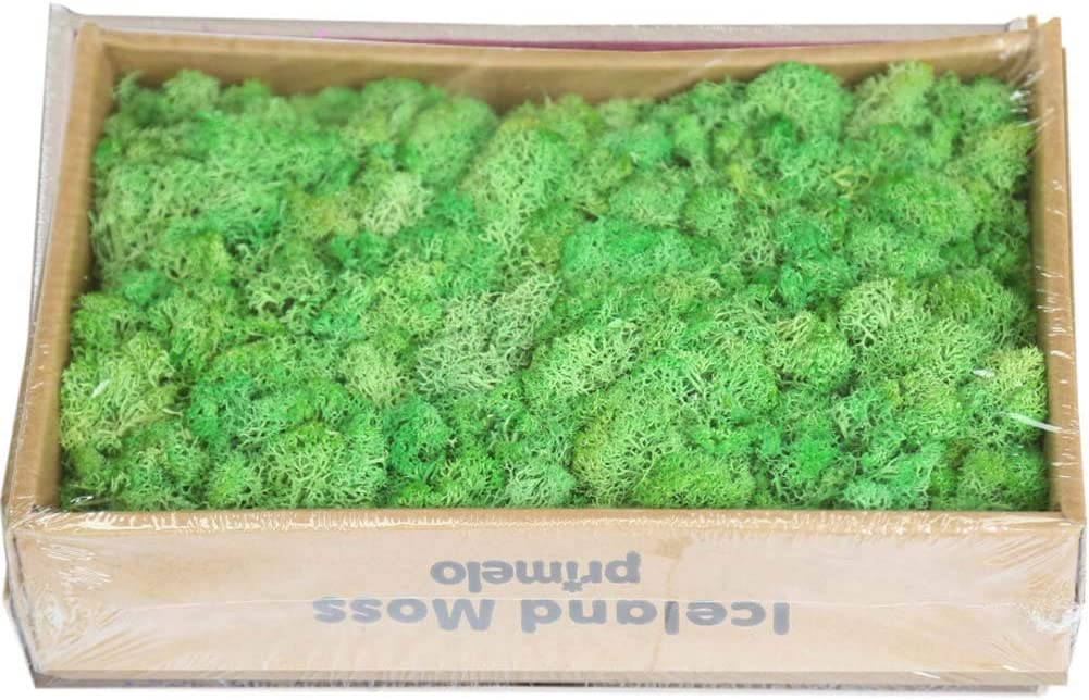 YWXKA Finland Dried Moss Immortal Max 59% OFF Wal Ball Max 57% OFF Home Decor