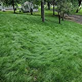 Best Fescue Grass Seeds - Outsidepride Legacy Fine Fescue Turf Grass Seed Review