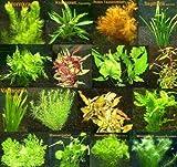 150 Wasserpflanzen XXL Set Dünger