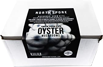North Spore Grow Your Own Oyster Mushroom Kit | Grow Mushrooms Indoors at Home | Vigorous and Productive Commercial Strain