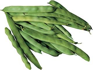 Burpee Roma II Bush Bean Seeds 2 ounces of seed