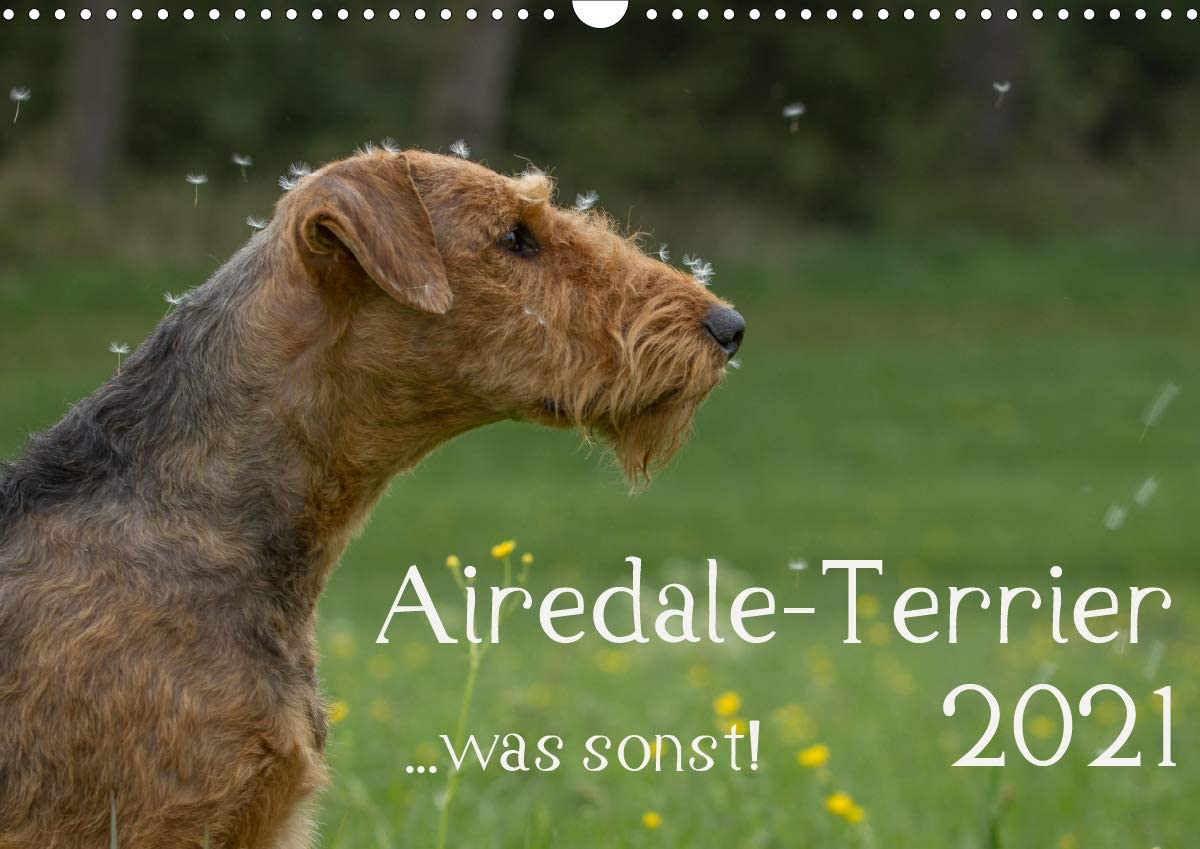 Airedale-Terrier shopping was sonst Wandkalender quer A3 Max 57% OFF 2021 DIN