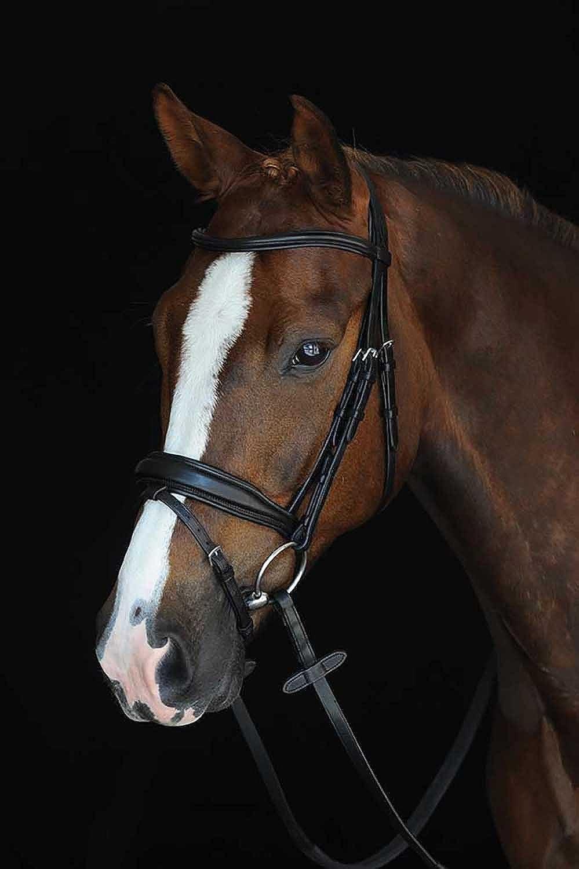 Collegiate Mono Crown Padded Raised Flash Bridle  Black