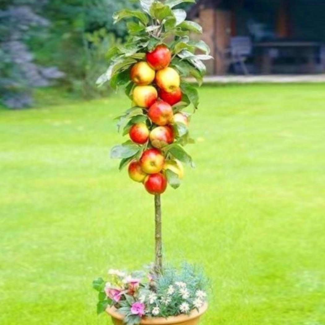 Ncient 5 Tipo Semilla Frutas Raras Semillas Frutas Comestibles, Semillas Frutas Exoticas Bonsai Arbol Fresco de Plantas Bonsai Semillas para Jardín Balcon Interior y Exteriores: Amazon.es: Jardín