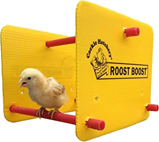 Roost Boost - Training Roost for Brooder Chicks