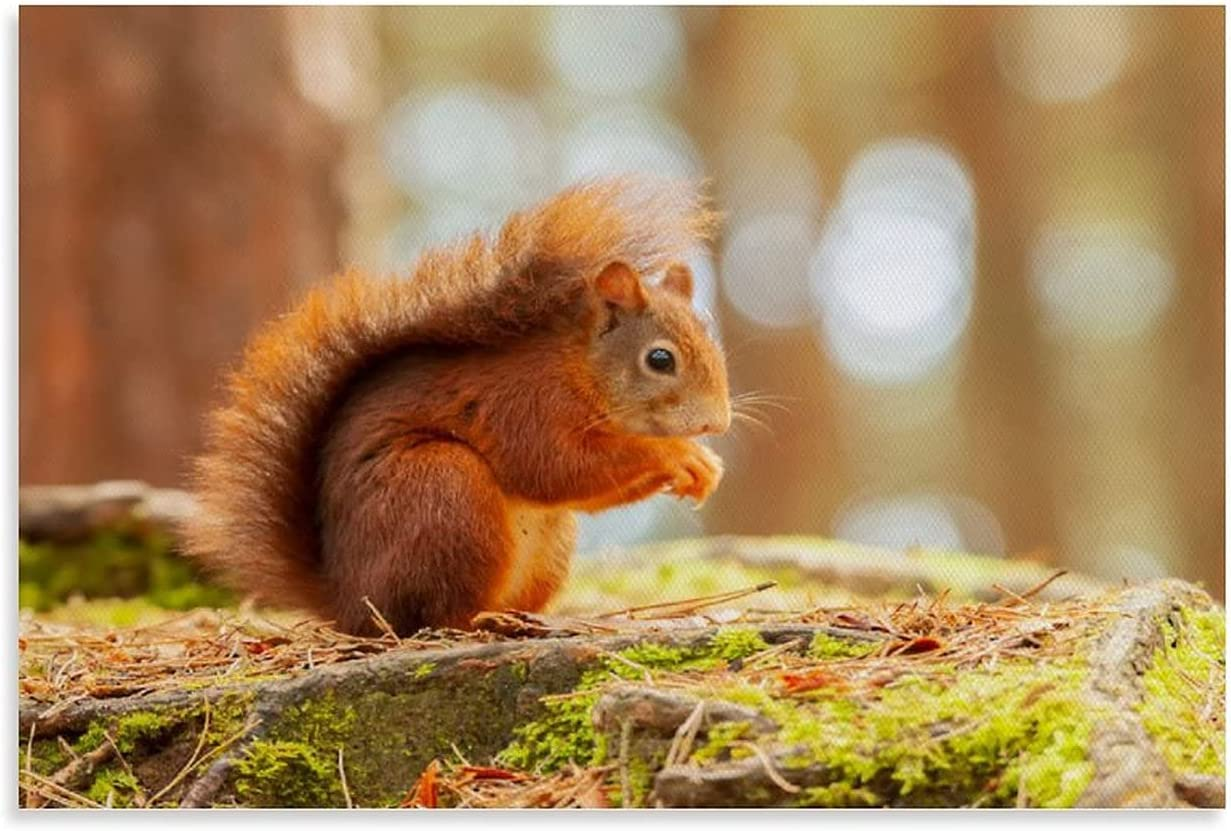 KRGGHR Squirrel Poster1 Canvas Tucson Mall Art and P Popular products Wall Poster Picture