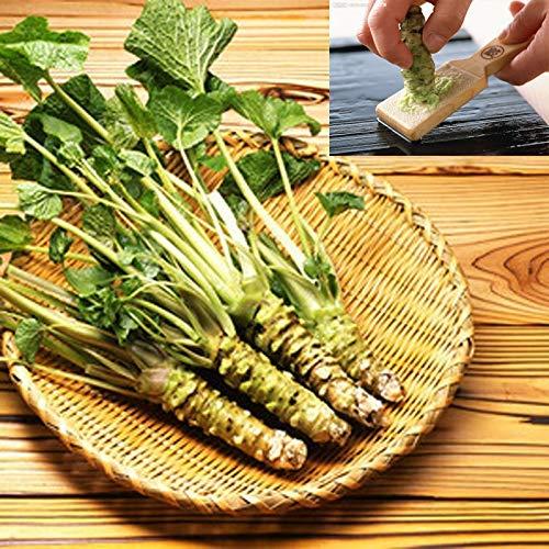 Semillas de Wasabi Semillas de rábano picante japonesas 8g 1000+ Semillas Vegetales Wasabia Japonica Home Garden Bonsai Plants