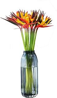 Best tropical bird of paradise flower Reviews