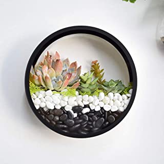 Best hanging shell planter Reviews
