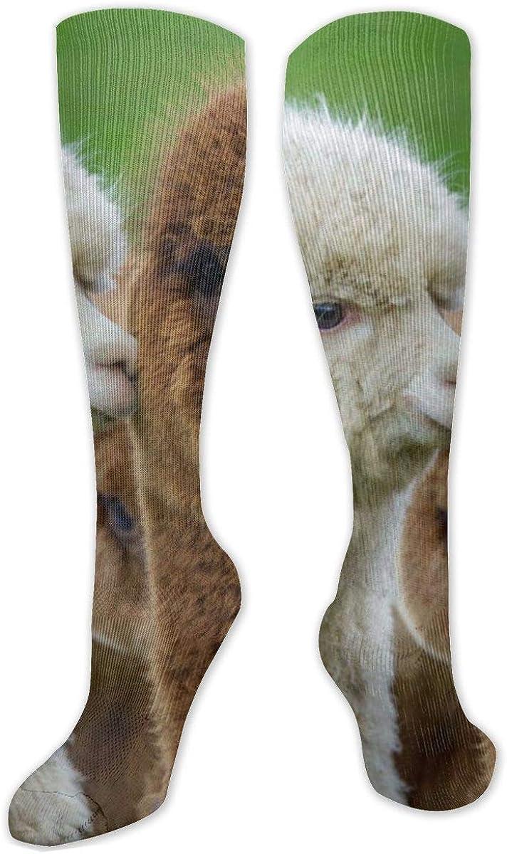 Beacon Alpacas Knee High Socks Leg Warmer Dresses Long Boot Stockings For Womens Cosplay Daily Wear