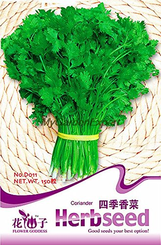 Quatre Saison Coriandre Graines de vente chaude, les semences chinoises persil, graines de légumes, Bonsai Pot Jardin des plantes
