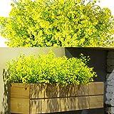 WILLBOND 12 Manojos Flores Arbustos Artificiales Plantas Flores Exteriores Resistentes a Rayos UV Arbustos Artificiales Decorativos para Decoración de Arreglo Floral, Centro de Mesa (Amarillo)