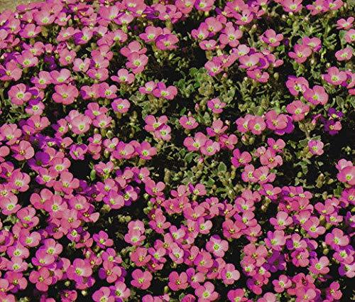 GEOPONICS 3 Pflanzen: Melisse,