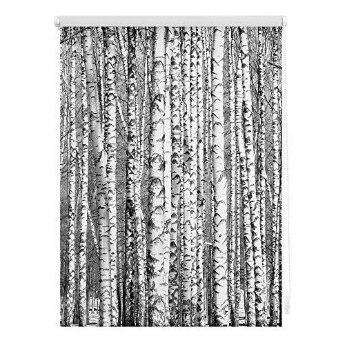 Lichtblick KRT.090.150.367 Rollo Klemmfix, ohne Bohren, Blickdicht, Birken - Schwarz-Weiß 90 x 150 cm (B x L)