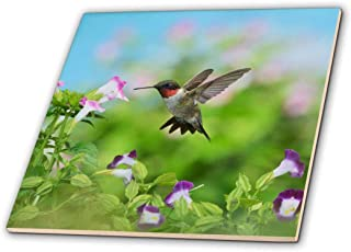 3dRose Ruby throated Hummingbird male feeding, Hill Country, Texas - Ceramic Tile, 10cm