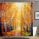 Stacy Fay Forest Tree Duschvorhang, Weg im Wald, Birke mit gefallenen Blättern, Sonnenschein, romantisch, Stoffstoff, Badezimmer-Dekor-Set mit Haken, 183 x 183 cm, orangebraun