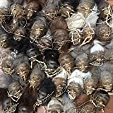 Daprofe Shrunken Head Replica for Sale Real Voodoo Juju Includes one(1) Head Similar to Those Shown in Photo