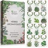 Kit de graines d'herbes aromatiques prêt à pousser OwnGrown, 12 épices et aromates à planter en un kit pratique, Kit graines aromatiques naturelles pour culture intérieure et extérieure