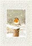 Coppenrath Weihnachten Robin Big Traditionelle Deutsche Adventskalender 41cm breit x 46cm Glitter gold Folie und Band zum Aufhängen