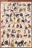 Primates Educational Poster 24 x 36in