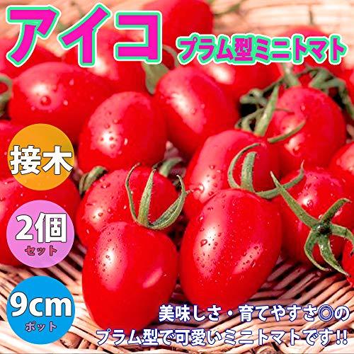 ITANSE『アイコ・プラム型ミニトマト(接ぎ木苗)』