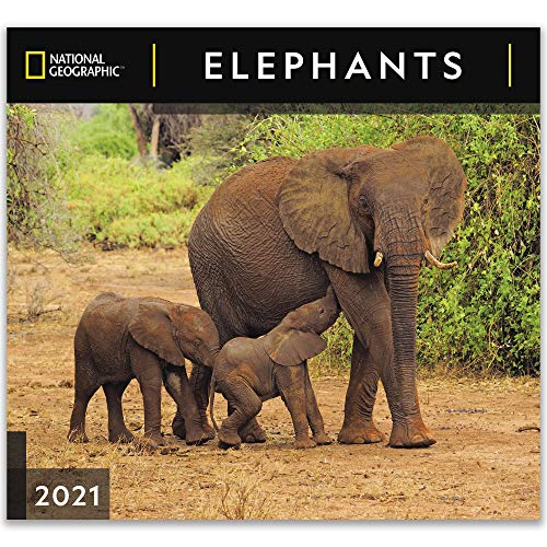 National Geographic Elephants 2021 Wall Calendar