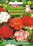 Geranie F2 Mischung Pelargonium zonale stehend einjährig