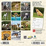 American Pit Bull Terriers 2020 7 x 7 Inch Monthly Mini Wall Calendar, Animals Dog Breeds 4