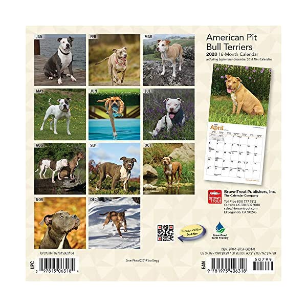 American Pit Bull Terriers 2020 7 x 7 Inch Monthly Mini Wall Calendar, Animals Dog Breeds 2